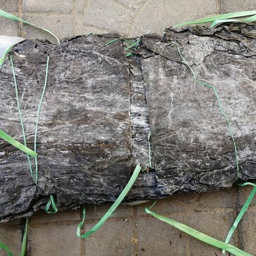 精品一棵菜 山东海带煮的耙 海带  折叠板菜整根海带折叠