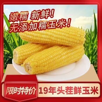 速凍糯玉米 正宗19年東北黃白糯嫩玉米棒 當季新鮮速凍東北特產