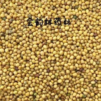 黄芥子 产地货源平价直销无硫 无土无杂 代打粉袋装包邮