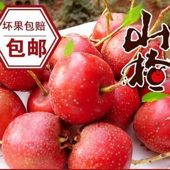 新鮮山楂果水果山楂特級農家自種現摘現發寶寶水果酸甜山楂糖葫蘆