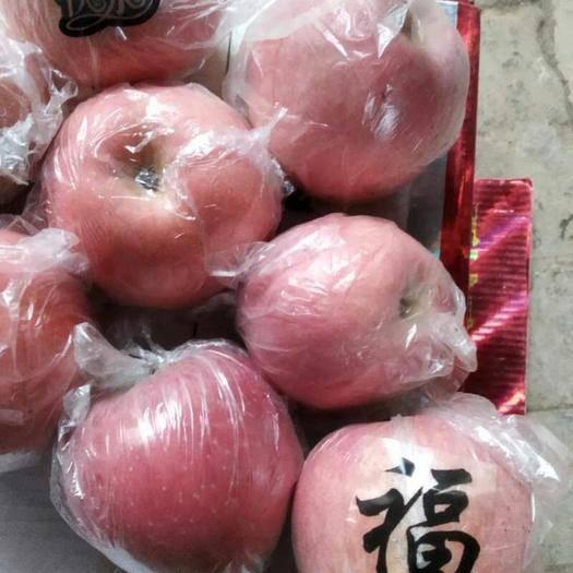 陜西省咸陽市禮泉縣 陜西紅富士蘋果質量保證,