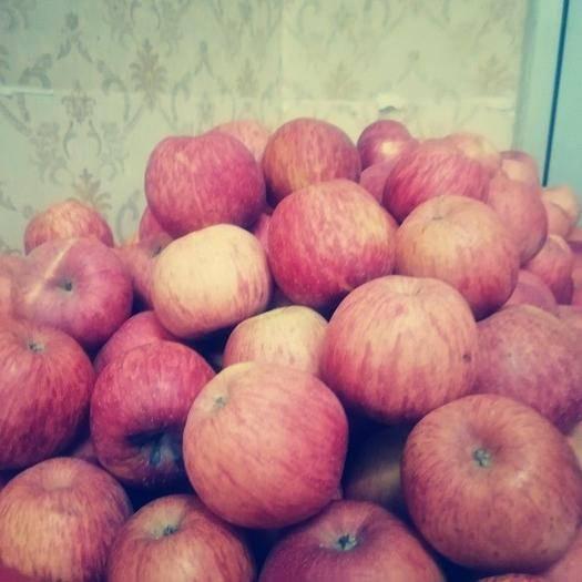 寧夏回族自治區石嘴山市大武口區紅富士蘋果 靜寧紅富士