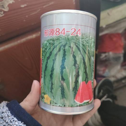 河南省商丘市夏邑縣 8424西瓜種子,高品質,高產量高甜度。