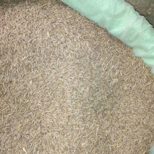 广西壮族自治区玉林市玉州区 孜然大量供应,产地批发价