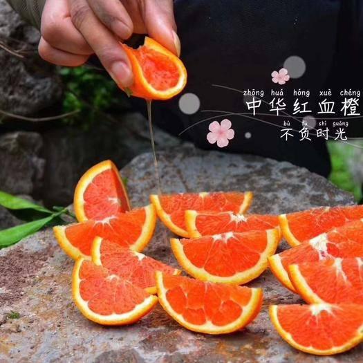 湖北省宜昌市秭歸縣九月紅臍橙 中華紅臍橙大果5斤包郵