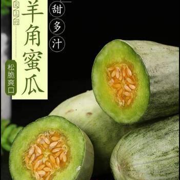 博洋61甜瓜 【旭宝农业??龙恩果蔬】??沙土地??一件代发全国直销