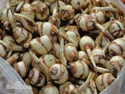 江苏省盐城市盐都区 白肉慈菇,盐城特产,营养丰富,绿色无公害。