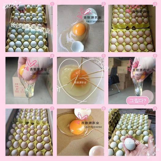 湖南省長沙市長沙縣綠殼雞蛋 420枚凈重35/37斤小綠