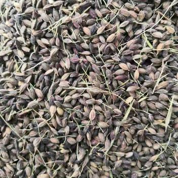 紫糯米富含蛋白质碳水化合物、B族维生素、钙、铁、钾、镁等营养