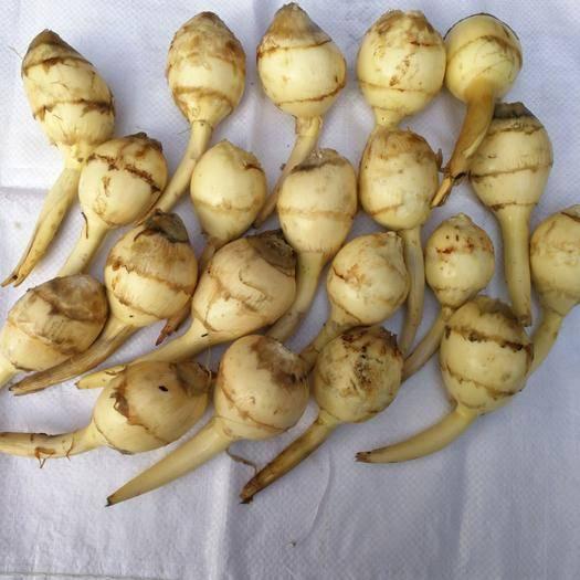 江苏省盐城市盐都区白肉慈菇 白肉茨菇,盐城特产,营养丰富,绿色无公害