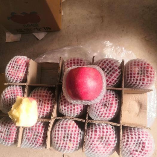 甘肅省平涼市靜寧縣 靜寧蘋果山貨大量出庫,40斤大箱,果形高樁,顏色亮度極高