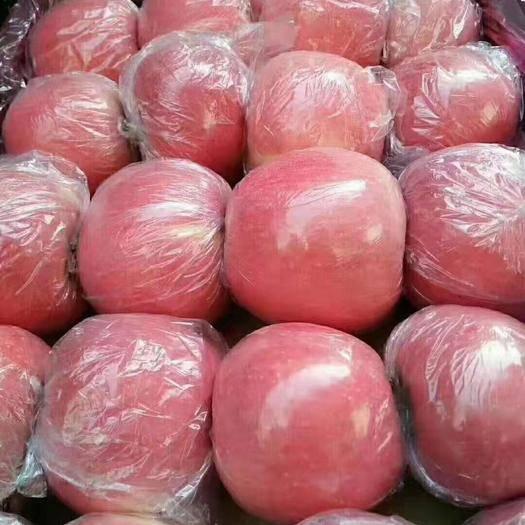 河北省石家莊市晉州市 紅富士蘋果膜袋紙袋紙加膜河北紅蘋果脆甜新鮮批發電商