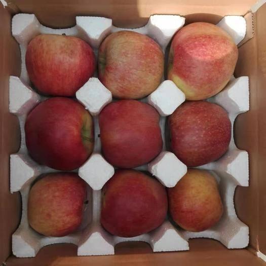 河北省石家莊市晉州市 河北紅星蘋果粉面沙甜新鮮產地直發大量上市年后發貨