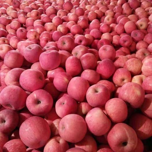 河北省保定市滿城區 高山富硒生態紅富士,無任何污染和殘留,專家蘋果基地。