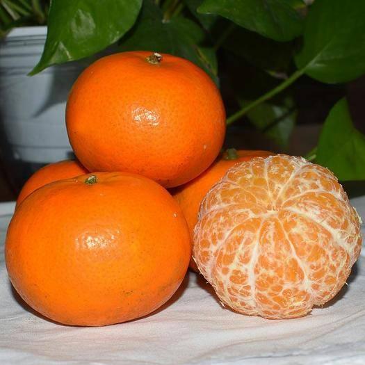 云南省昆明市官渡区 云南沃柑高原沃柑新鲜超甜一件代发包邮甜水果