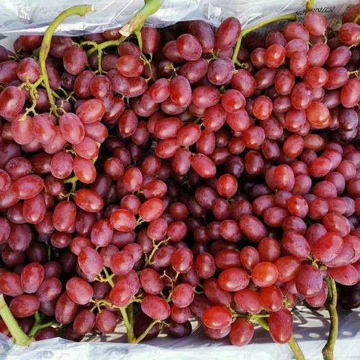 山东省青岛市莱西市 精品克伦生葡萄品质好无坏果