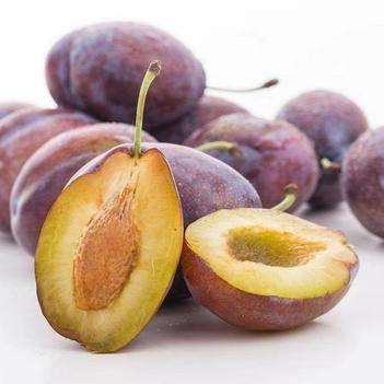西梅苗 法蘭西保品種質量 高產 包成活 甜度高 基地現挖直銷