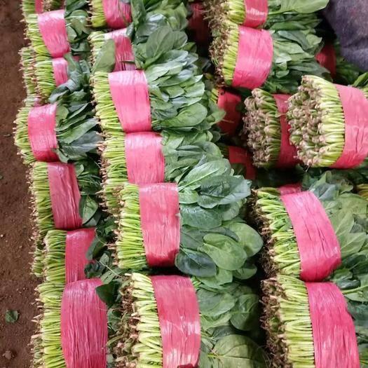 山东省滨州市惠民县 万亩菠菜基地,大量供货,各种规格,包装齐全,保质保量!