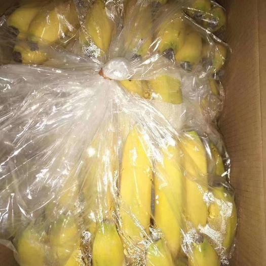 河北省邯郸市永年区 常年供应,微商,电商,批发商,四季精品香蕉。