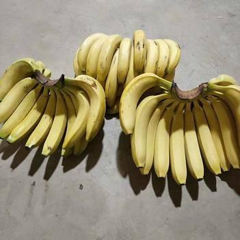 常年供应,微商,电商,批发商,四季精品香蕉。