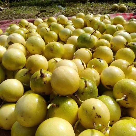 广东省茂名市化州市黄金果 黄金百香果,7个以内中大果,芭乐味