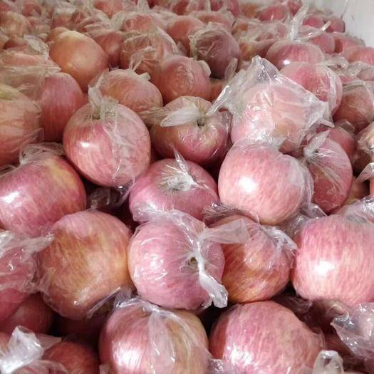 陜西省咸陽市禮泉縣紅富士蘋果 75mm以下 條紅 膜袋