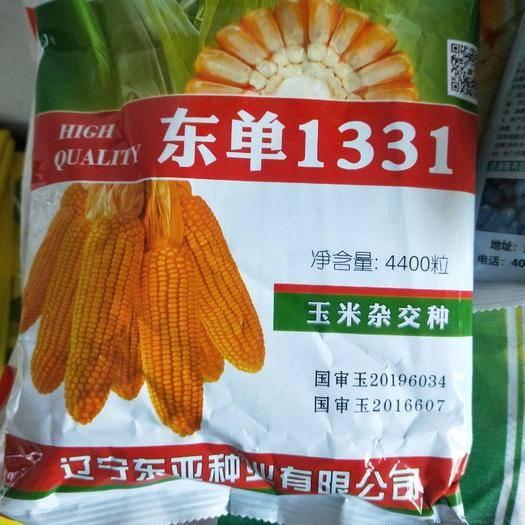 河南省商丘市夏邑縣東單1331玉米種子 國審品種東單1331,青農11,綜合抗性好,產量高,生蟲少。