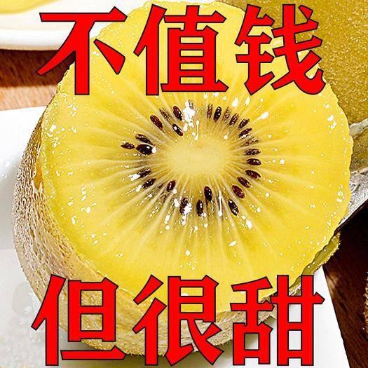 四川省攀枝花市西区 四川黄心猕猴桃|奇异果|新鲜水果|农场直供