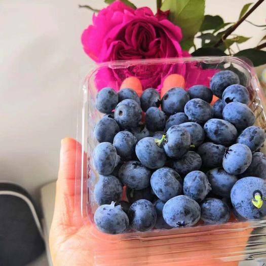 云南省昆明市石林彝族自治县 一合让你舌尖记住的蓝莓,我们自己种的!