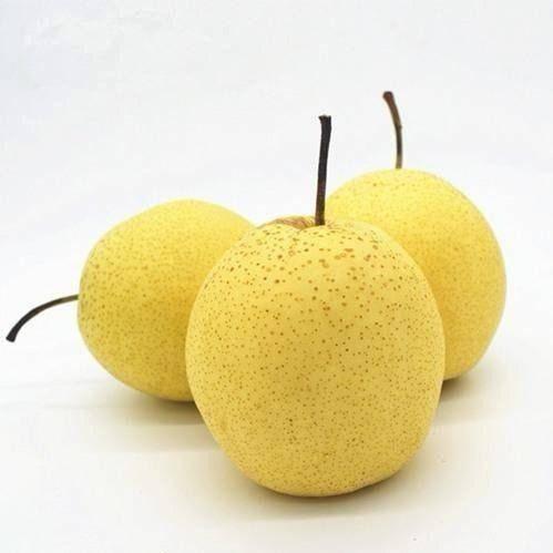 河北省石家庄市晋州市 水果雪梨新鲜5斤10斤实惠装天然水果健康河北鲜果