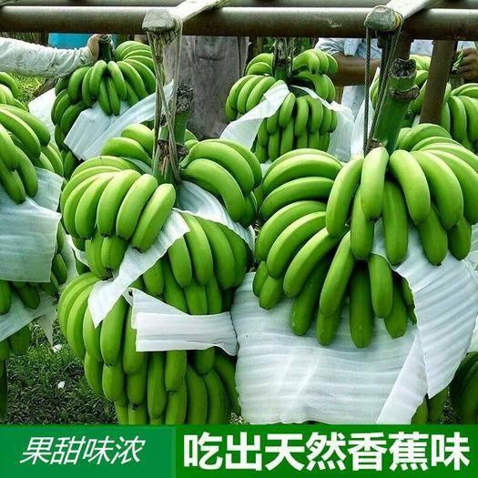 广西壮族自治区南宁市兴宁区 【包邮】广西新鲜香蕉9斤5斤3斤新鲜采摘现摘现发香蕉