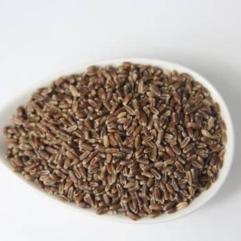 藏血麦 内蒙古高原可汗血麦