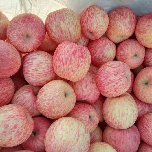 甘肅省平涼市靜寧縣 靜寧蘋果紅富士品種冷庫大量出貨,產地代辦帶你尋找最優質的貨源