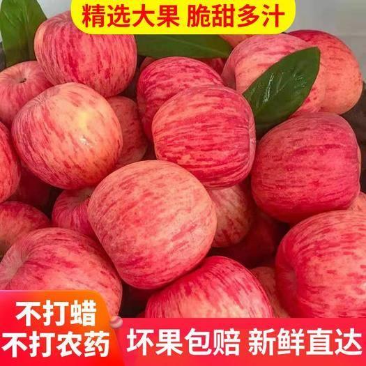 河南省安陽市安陽縣 【壞果包賠】紅富士新鮮蘋果10斤包郵 現摘現發
