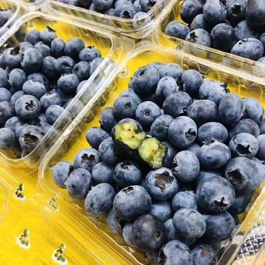 河南省郑州市惠济区 包邮, 新鲜蓝莓水果冷链包邮 当季高原水果