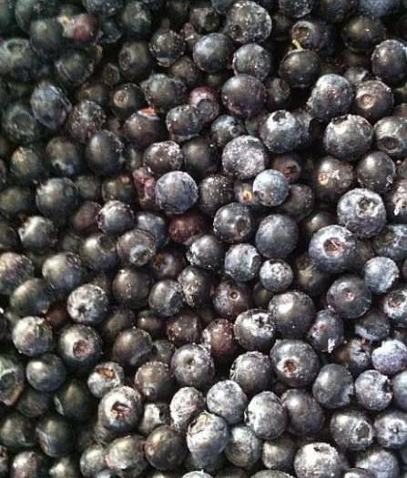 湖北省恩施土家族苗族自治州恩施市兔眼蓝莓 年底清仓处理
