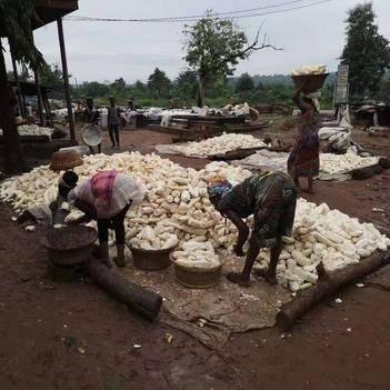 非洲木薯产地直发,质量保证,月产量6万吨长期供应