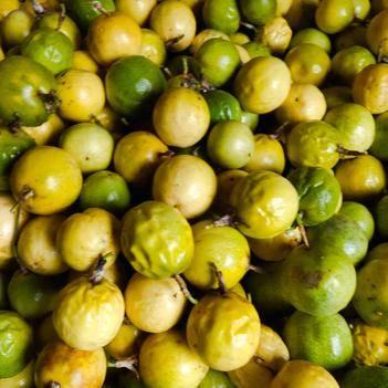 树上熟的黄金果皱果