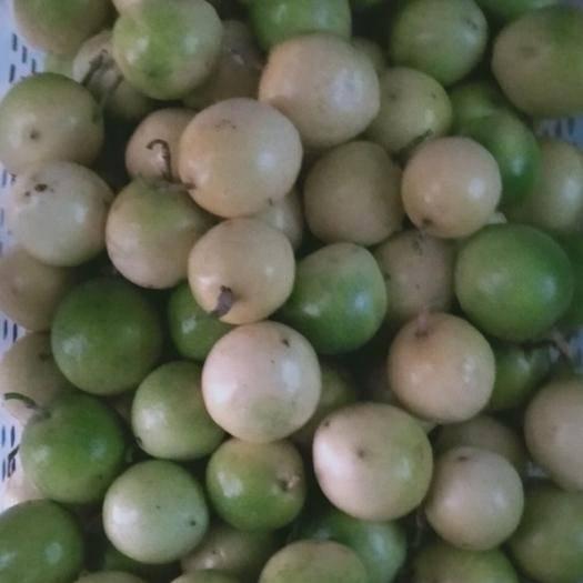 广东省茂名市化州市 欢迎订购黄金果