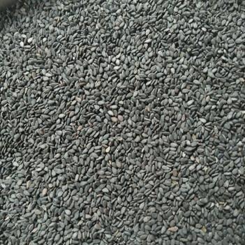 黑芝麻 颗粒大,饱满,质量好