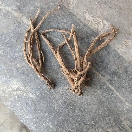 云南省大理白族自治州巍山彝族回族自治县 续断现在开始挖了,数量多多,价格美丽,大老鼠小老鼠都爱