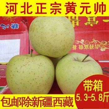 河北金帥蘋果黃元帥粉面蘋果黃香蕉批發年后發貨