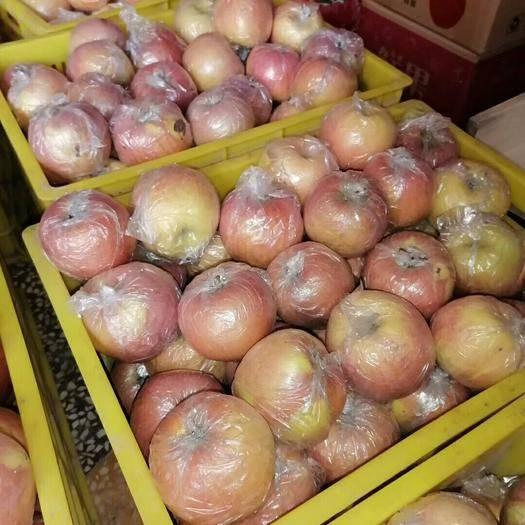 湖南省岳陽市湘陰縣 陜西紅富士蘋果85以上裝箱零售批發