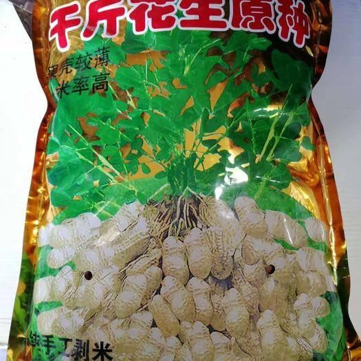 河南省商丘市夏邑縣 (5斤一袋(米)) 千斤花生種子果殼較薄出米粒高 抗病性強