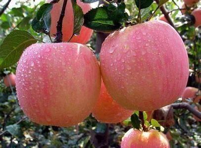 山東省聊城市冠縣 自己家蘋果 春節物流停止前發完還有2000斤