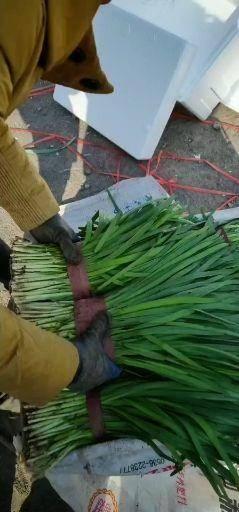 河北省秦皇岛市昌黎县 要韭菜的联系我,高中低等要哈样都能装
