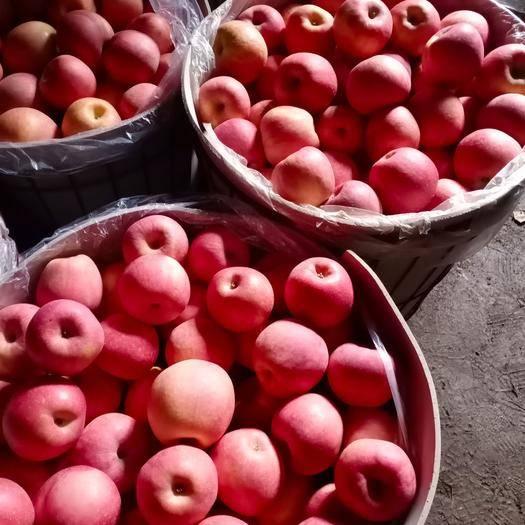 遼寧省葫蘆島市綏中縣紅富士蘋果 窖藏紅富士 大量供應中 物美廉價