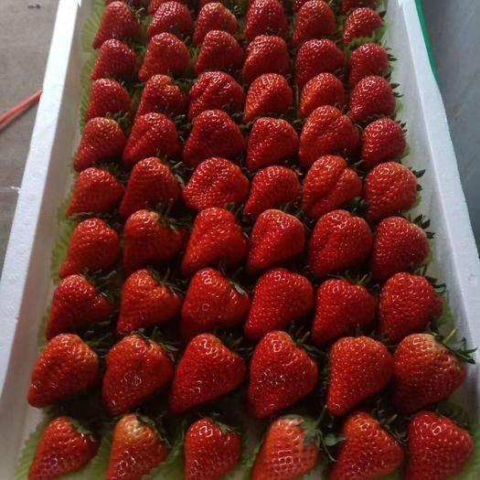 辽宁省大连市庄河市 庄河红颜久久和幸香草莓需要留言,支持一件代发要量