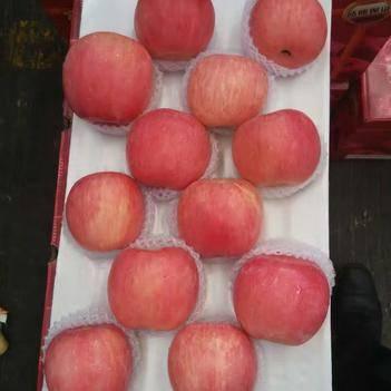 紅富士蘋果 正宗紅富士批發,萬畝果園,產地直銷 一手貨源 常年供應