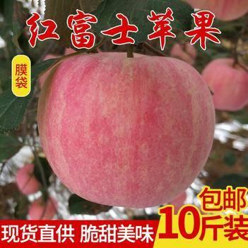 富士王蘋果 75mm以上 全紅 光果